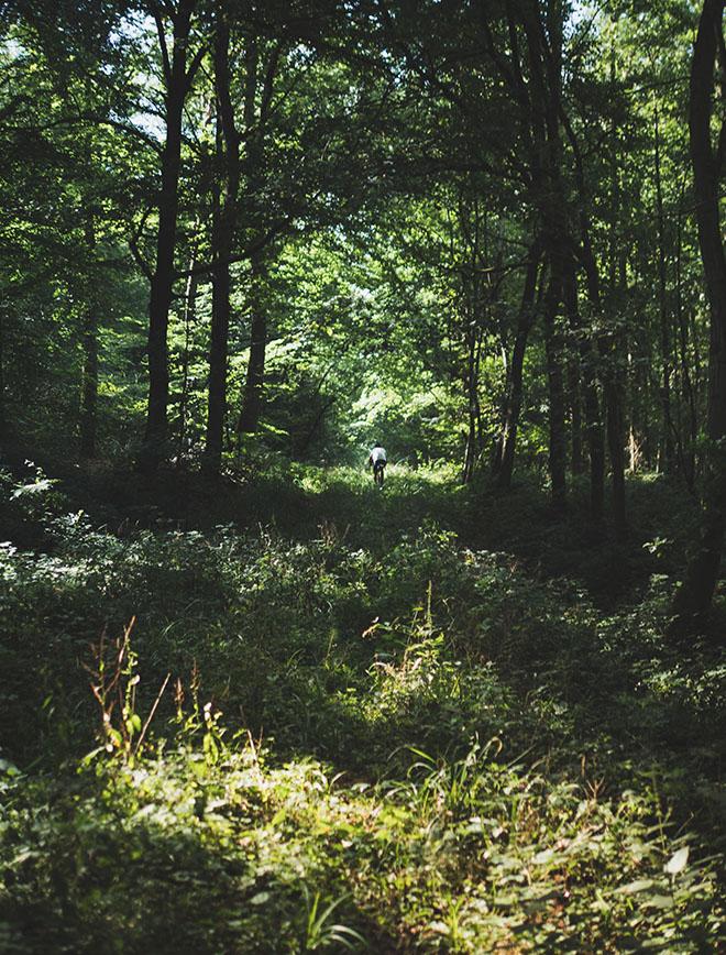 morvan - vélo - cycliste au loin dans la forêt