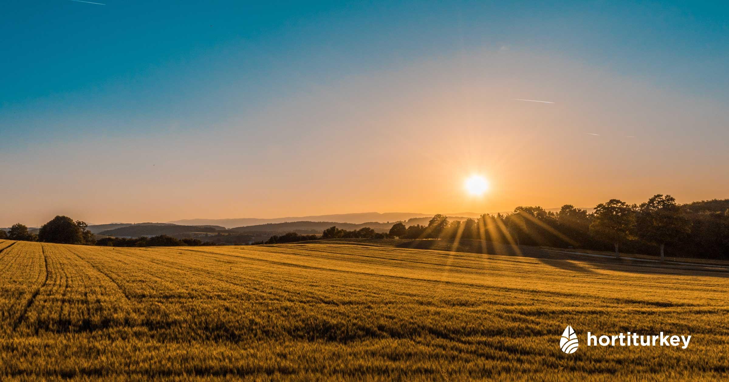 Tarımsal üretim yapan çiftçi ve ziraat mühendislerini, tarım firmalarını, fuarları ve sektörel liderleri bir araya getirerek büyümelerine katkı sağlıyoruz.