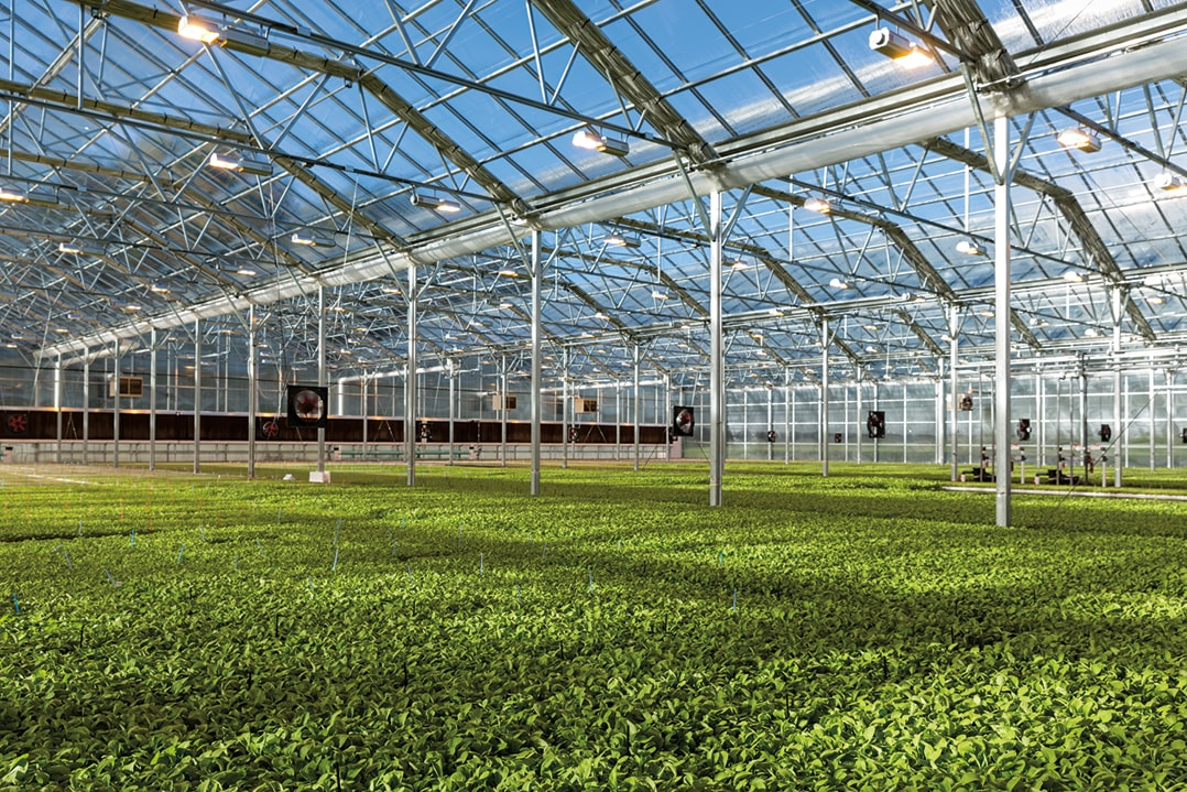 Seralar; iklim koşullarından etkilenmeden üretim yapmak için kullanılır. Kurulumu ve yapılarına göre farklı çeşitlere ayrılırlar.