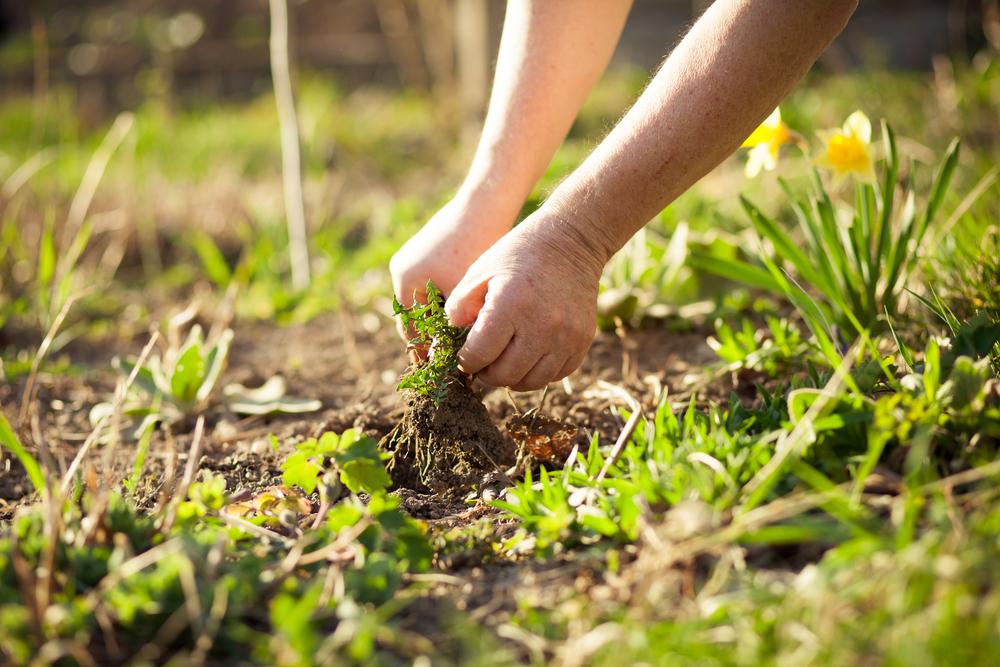Kendiliğinden yetişen yabani otlar, Ph değeri ya da nem dengesi gibi toprağın yapısına dair önemli bilgiler verir.