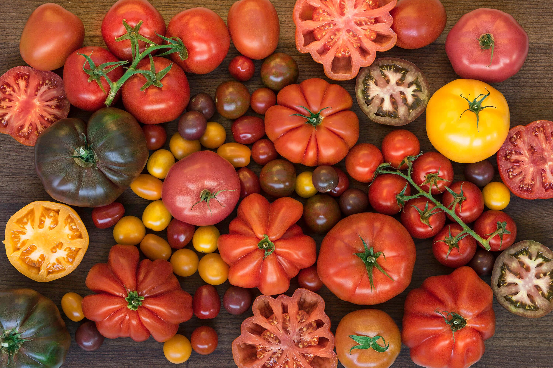 Hibrit tohumlardan üretilen yeni çeşitler.