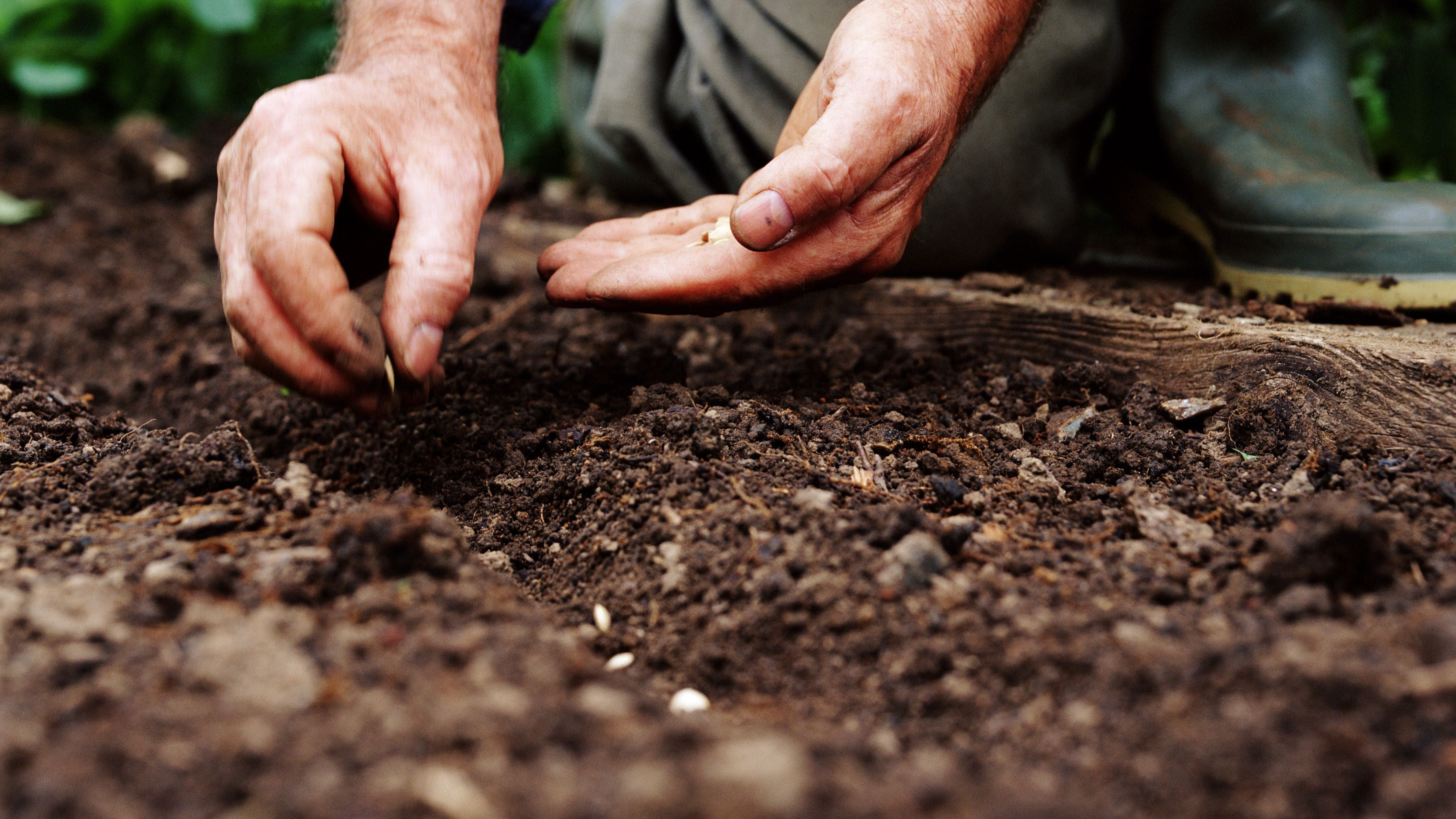 Tohum ekimi.