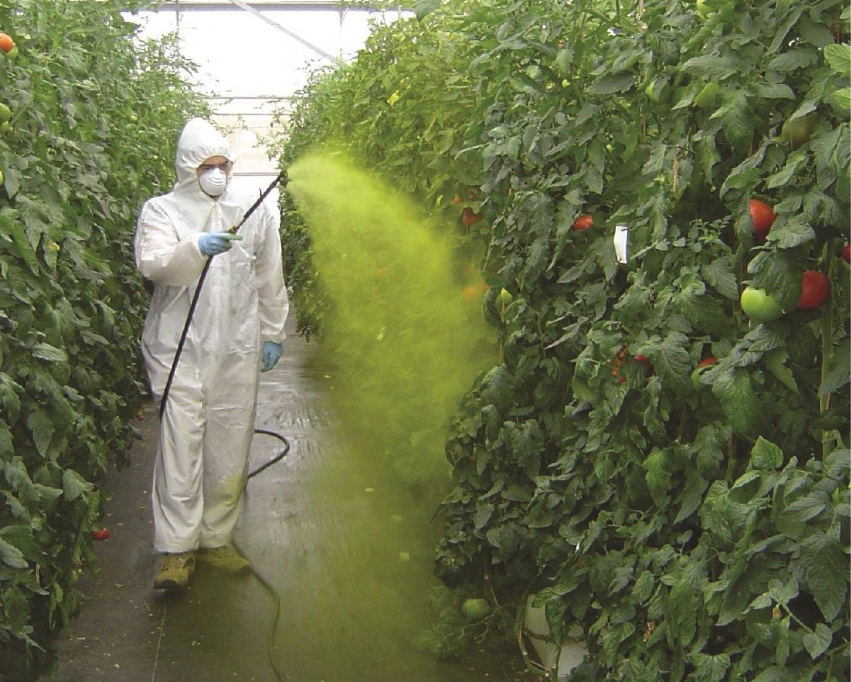 Örtüaltı sebze yetiştiriciliğinde kimyasal zirai mücadele uygulama tekniklerini öğrenmek mücadelenin verimliliğini arttırır ve bitkilere olası bir zararı önler.