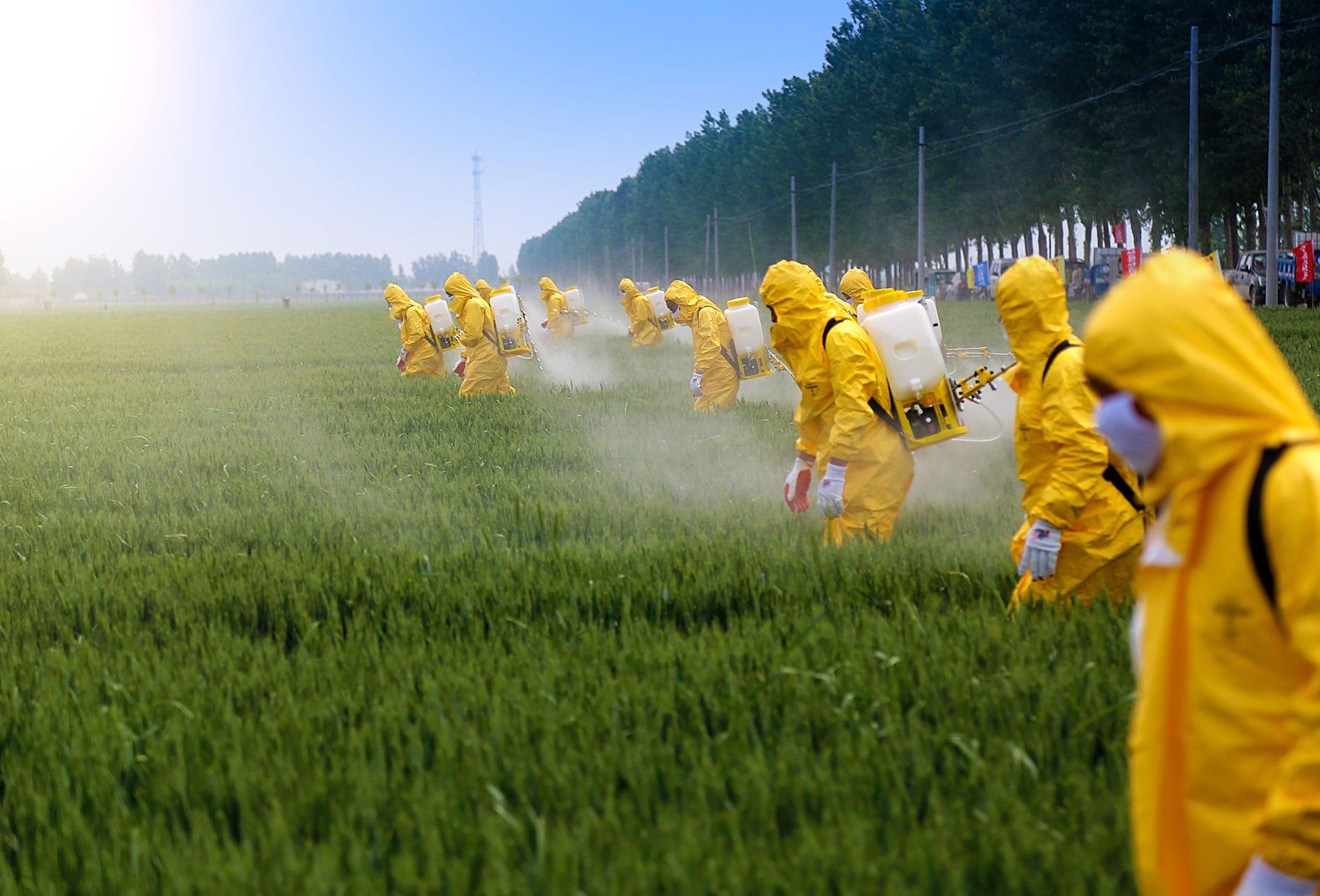 Buğday yetiştiriciliğinde kimyasal zirai mücadele uygulama tekniklerini öğrenmek mücadelenin verimliliğini arttırır ve bitkilere olası bir zararı önler.