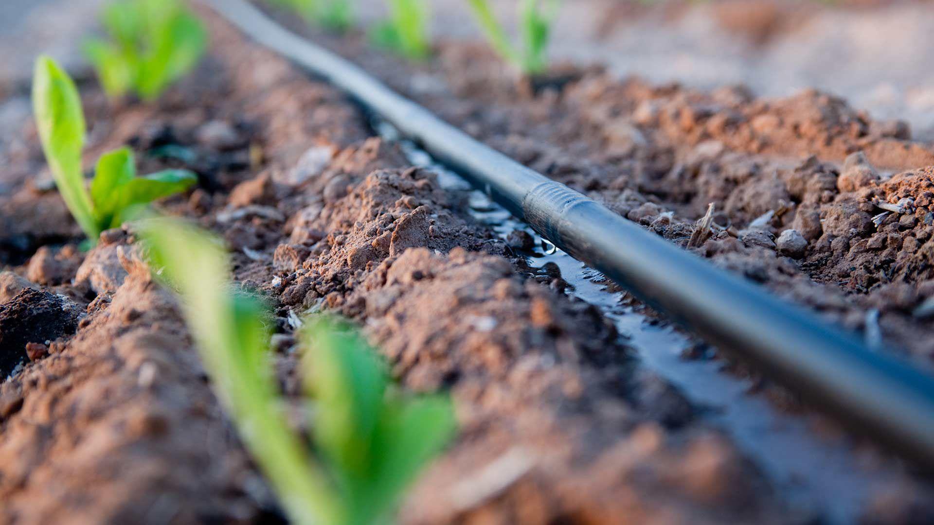 Damla sulama sisteminde su, bitkinin kök bölgesine damlalar olarak uygulandığından, verim artışı ve su tasarrufu sağlar.