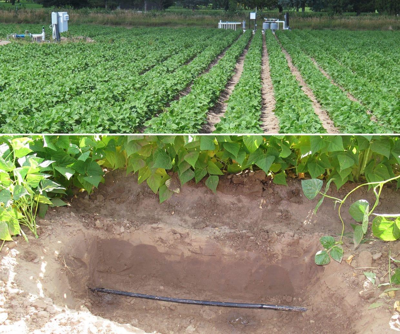 Toprak altı damlama detayı