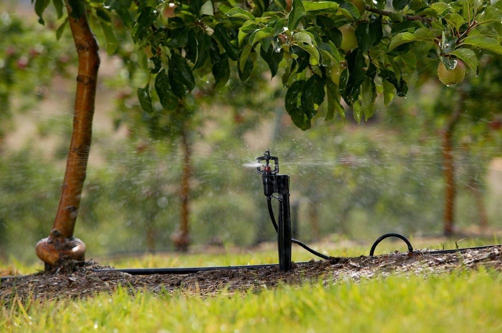 Bir meyve bahçesinde çalışan mini sprink