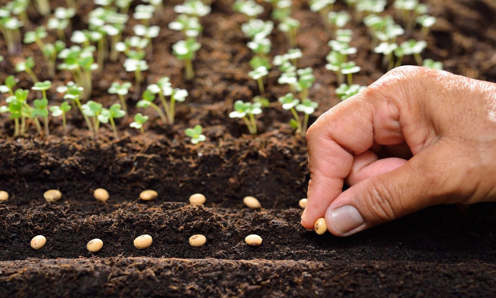 Ekim yapılacak alana göre tohum ekimleri de farklılık gösterir.
