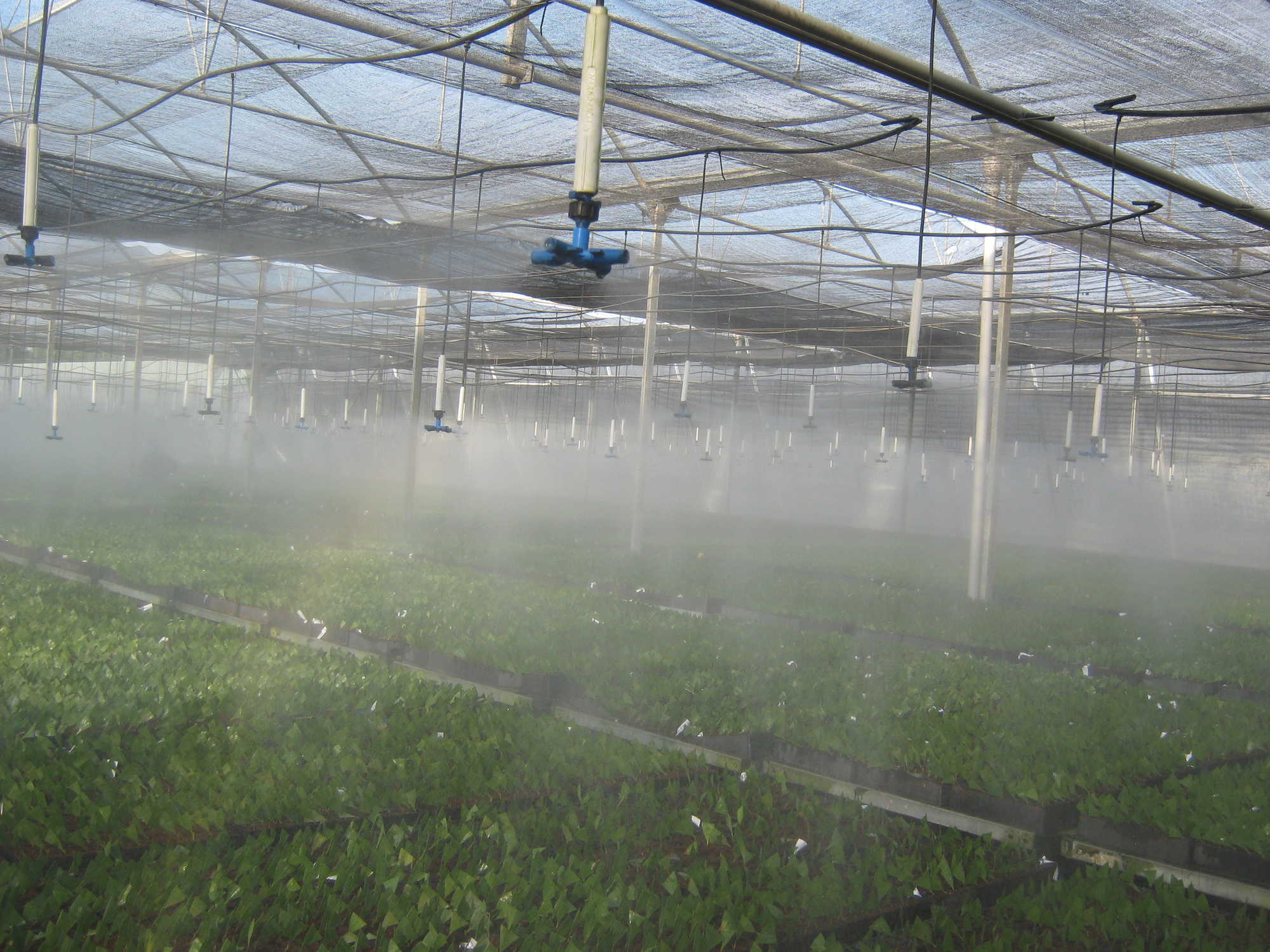 Sabit üstten yağmurlama sistemi