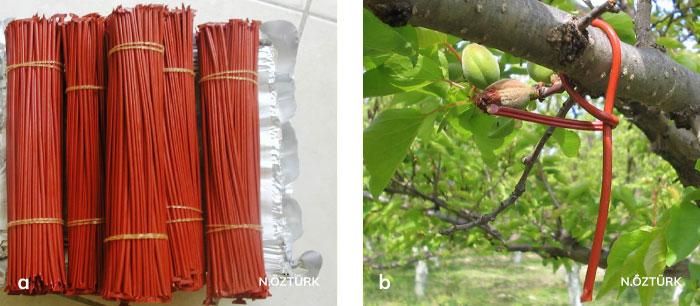Çiftleşmeyi engelleme tekniğinde, Isomate-C Plus tipi yayıcılar ve yayıcıların elma ağacı üzerine asılışı