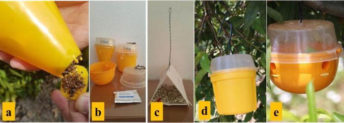 Akdeniz meyvesineği'nin farklı tip tuzakları