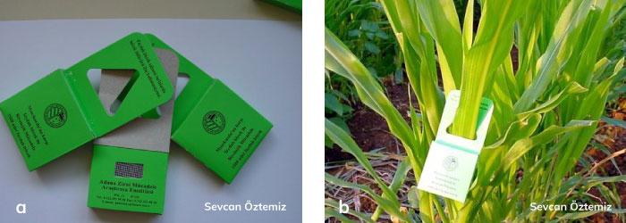 mısır bitkisinde doğal düşman salma çantaları