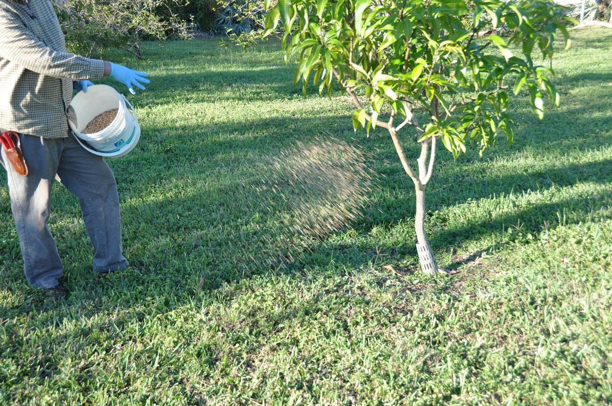 Meyve ağacı taç iz düşümüne gübre verme anı