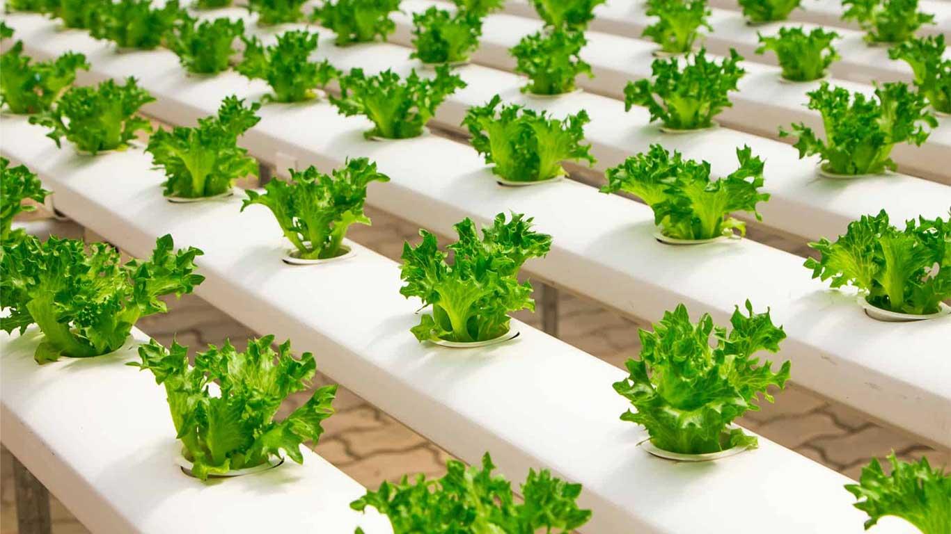 Hidroponik sistemler, topraksız tarım modellerinden biridir. Hidroponik tarımda, bitkiye ihtiyacı olan besinler toprak yerine su vasıtasıyla verilir.