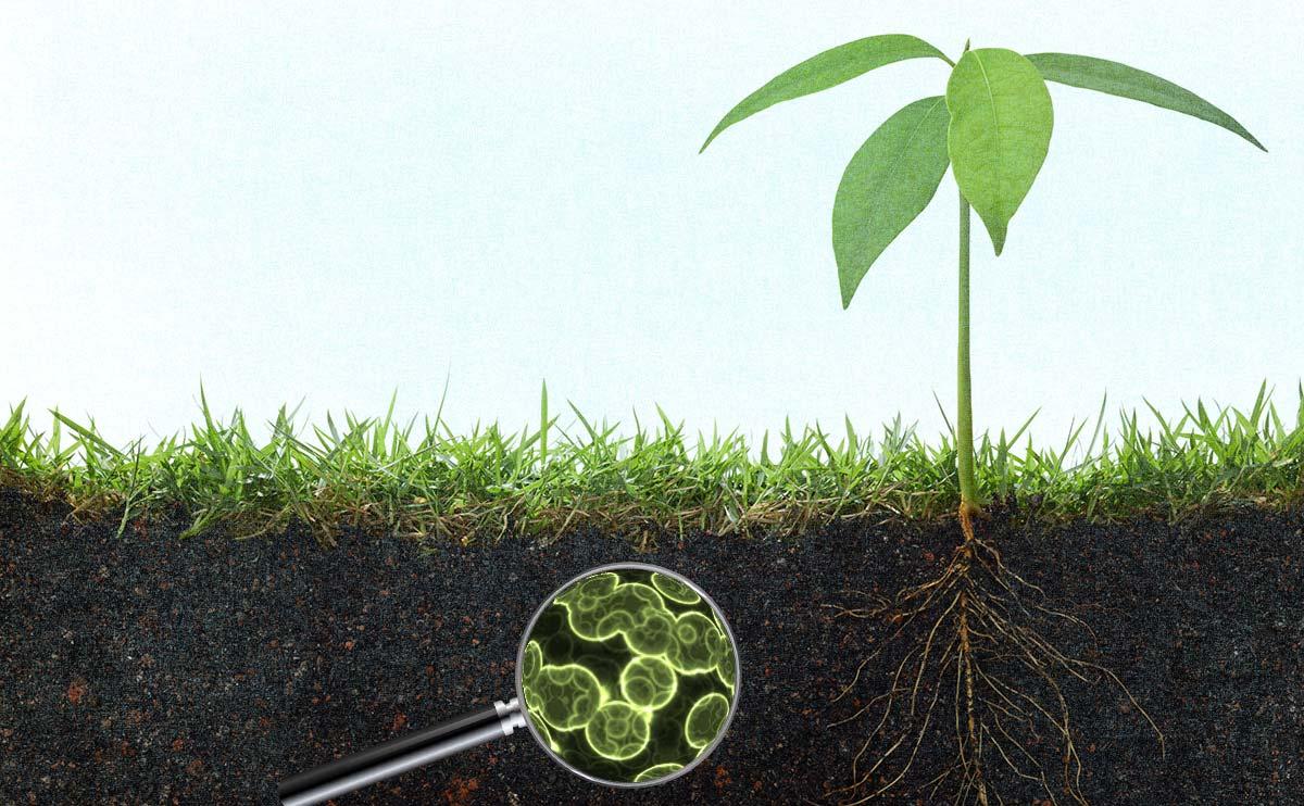 Humik asit ve toprak içindeki mikrobiyolojik maddeler.