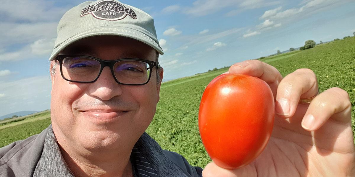 """AD-ROSSEN """"double purpose"""" tip domates denemelerinde mutlu sona yaklaştı."""