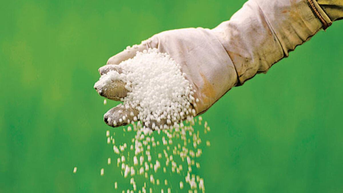 İçeriğinde %33 oranında bulunan azotun yarısı amonyum, diğer yarısıda nitrat azotu formunda olmasından dolayı; bitkiler üzerindeki etkisi çabuk ve devamlıdır.