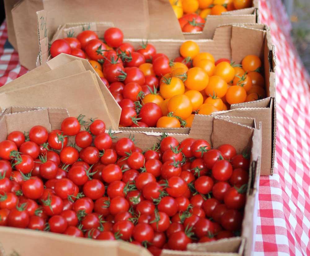 Paketlenmiş domatesler.