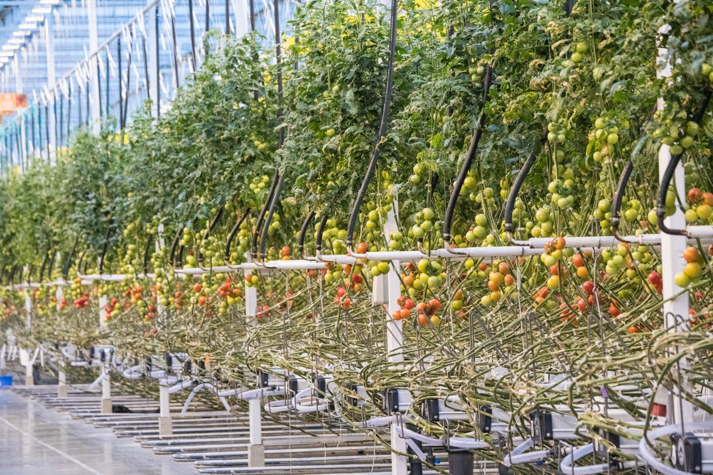 Yapılan araştırmalara göre, gelecek 30 yıl içerisinde yüksek teknolojik seraların dünya tarımındaki dengeleri değiştirebileceği düşünülmektedir.