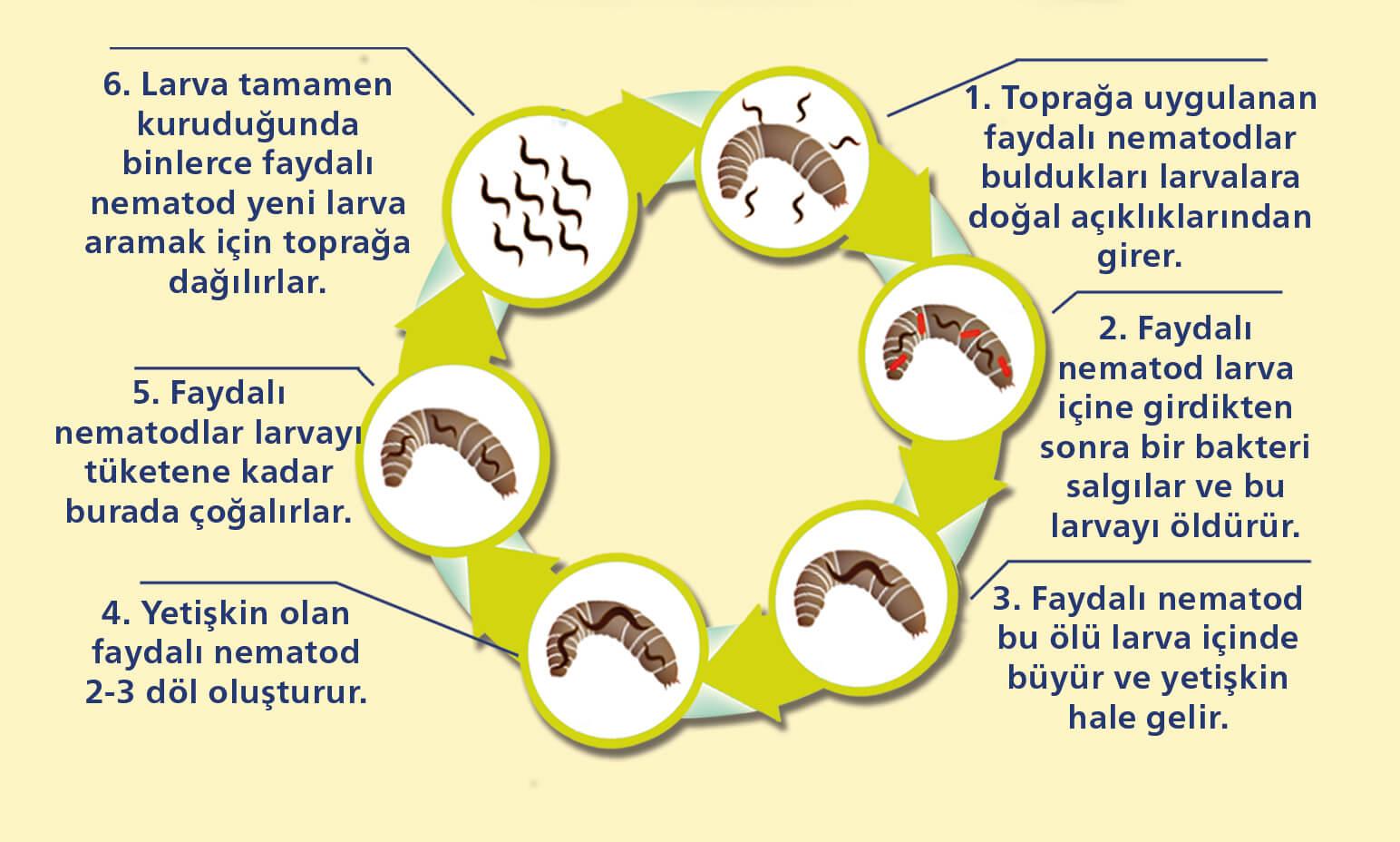 CAPSANEM'in Çalışma Prensibini GösterenDiagram