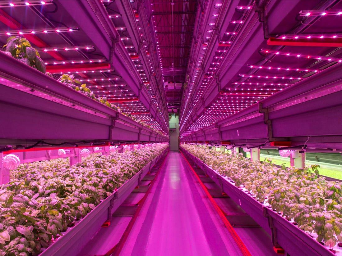 Dikey tarım üretimi için aydınlatılan bir tesis.