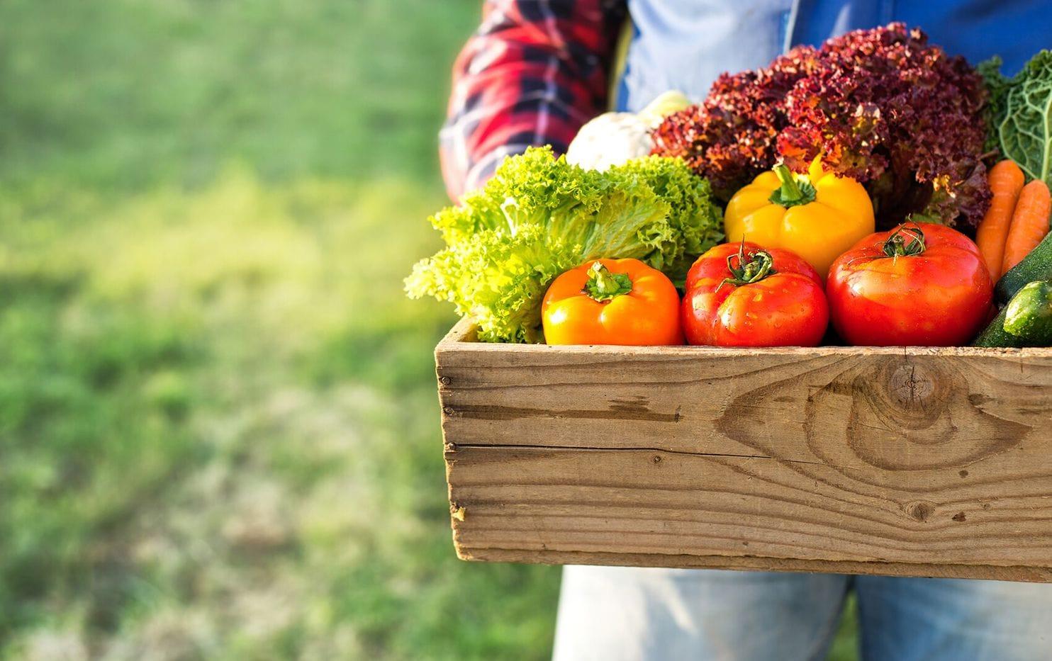 Bitkileri zararlılara ve hastalıklara karşı korumak, güvenli bir gıda tedariki sağlamak için çok önemlidir.