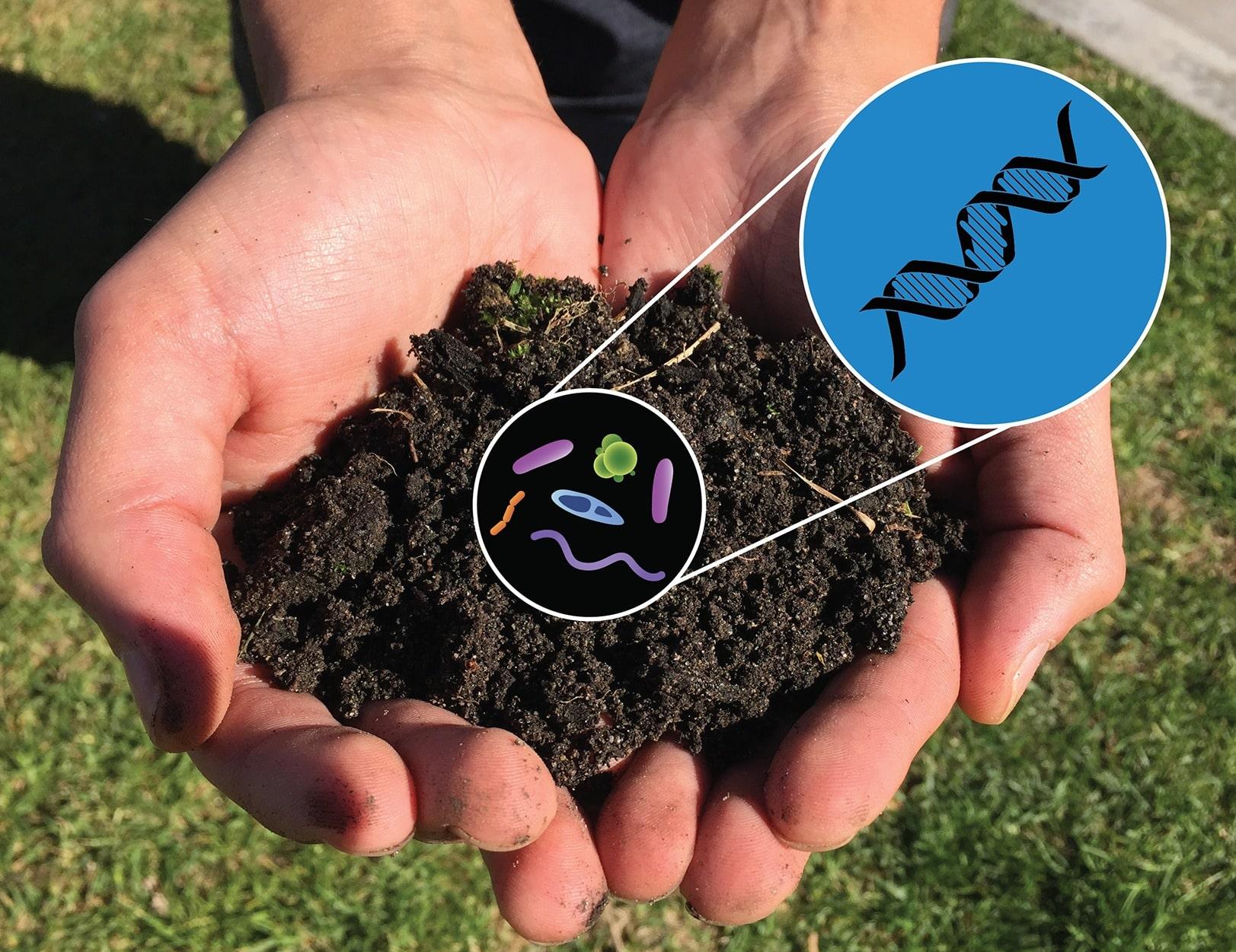 Temsili toprak bakterileri görseli
