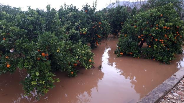 Zarar gören turunçgil bahçeleri