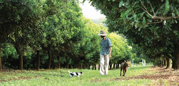 Avustralya'daki Jindilli Çiftliği (%100 rejeneratif)