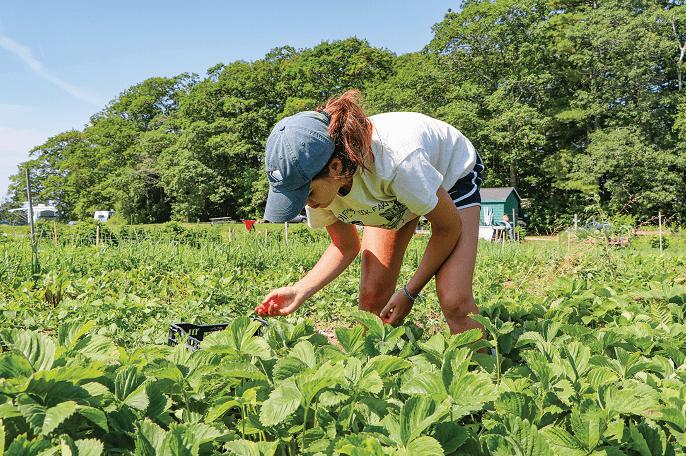 Tarlada rejeneratif tarım uygulamaları için eğitilen stajyerler