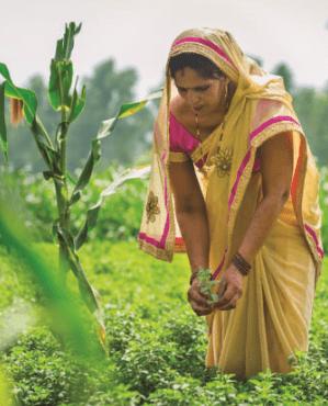 Hindistan'da pilot bir çalışma sahası