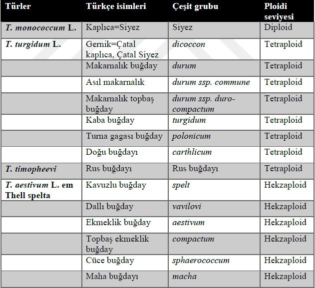 İlkel Kültür Buğdayları, Çeşit Grupları ve Ploidi Seviyeleri