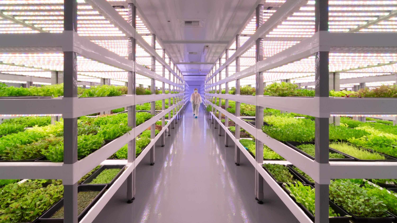 Son bir kaç yıldır istikrarlı bir şekilde artış gösteren kapalı alandaki ürün yetiştiriciliği daha ne kadar büyüyebilir?