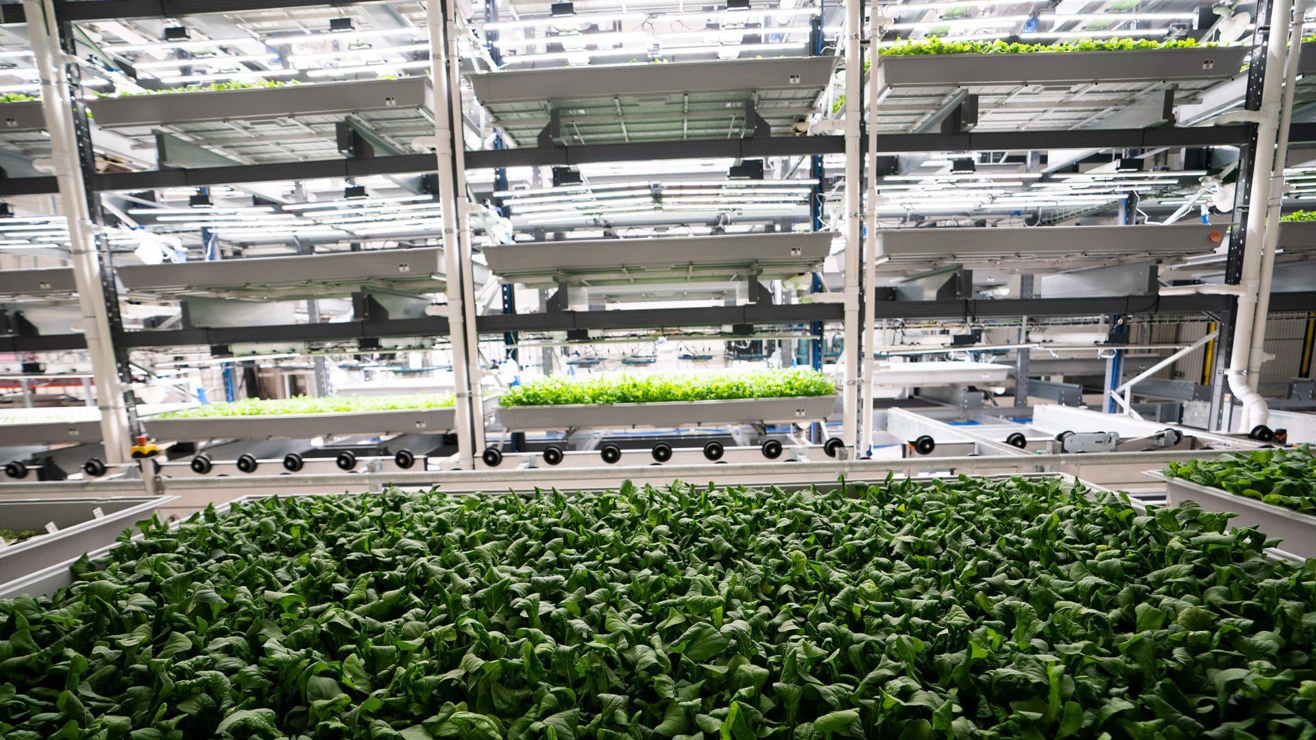 Dikey tarım üretim tesisi