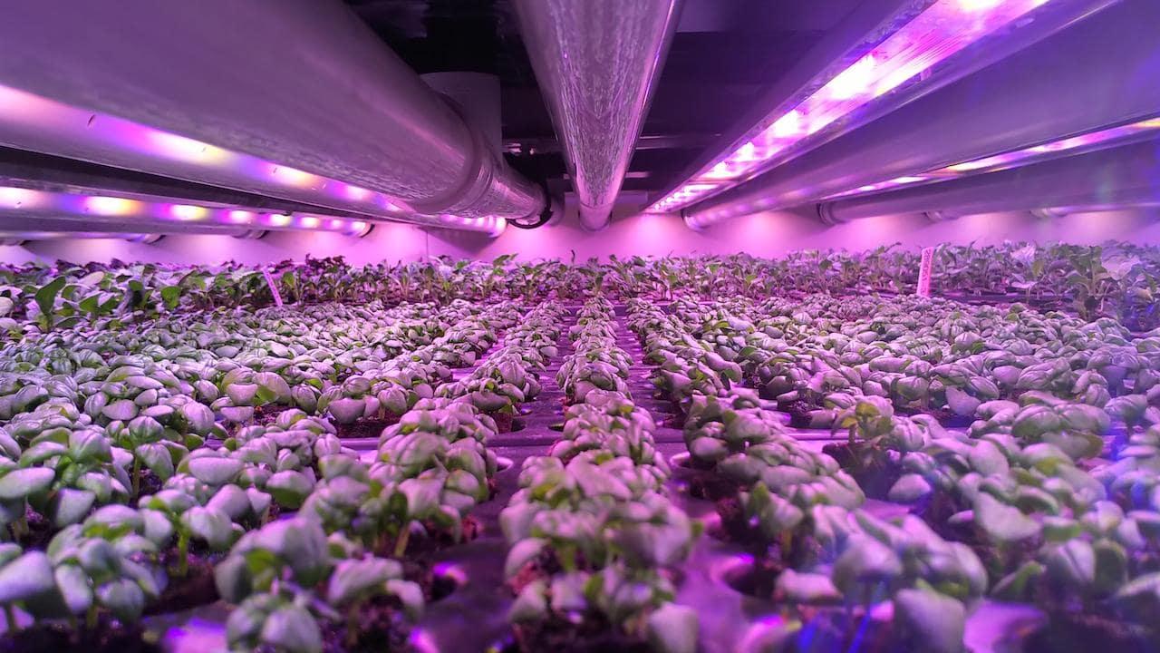Dikey tarımda kullanılan led aydınlatmalar