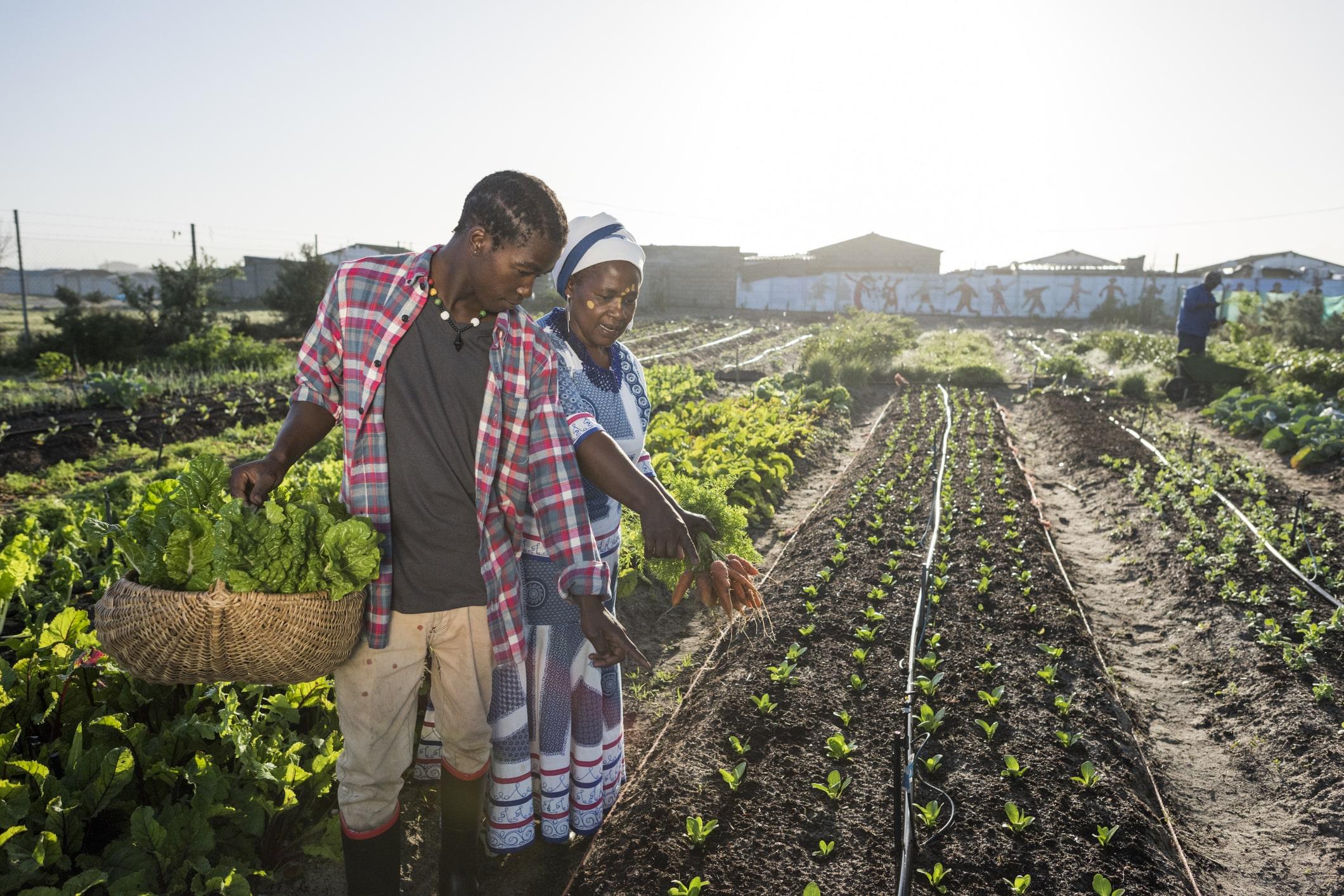 Sınır ötesi tarım yatırımı kavramını; başka bir ülkenin sınırları içerisindeki toprağın tarımsal üretim yapmak için kiralanması veya satın alınması olarak tarif etmek mümkündür.