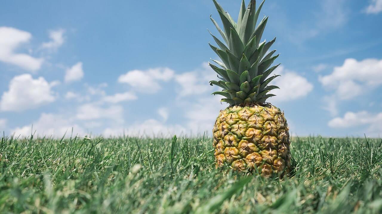 Queen Ananas çeşidi.