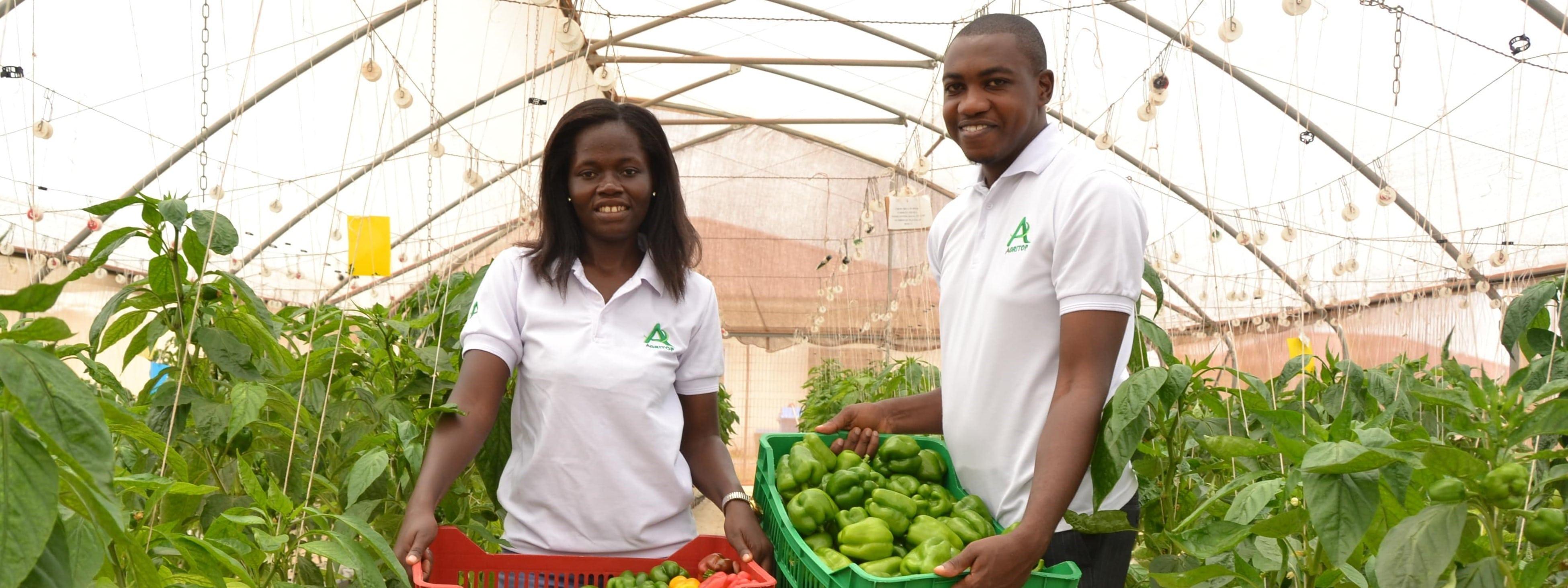 Değişen üretim, teknoloji ve coğrafi koşullar, çiftçileri sera yetiştiriciliği konusunda teşvik etmektedir.