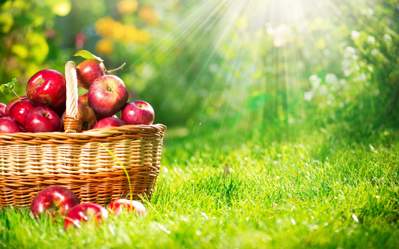 Elma dünyada tarımı yaygın olarak yapılan bir türdür ve üretim bakımından muz ve üzümden sonra en fazla üretilen üçüncü meyvedir.