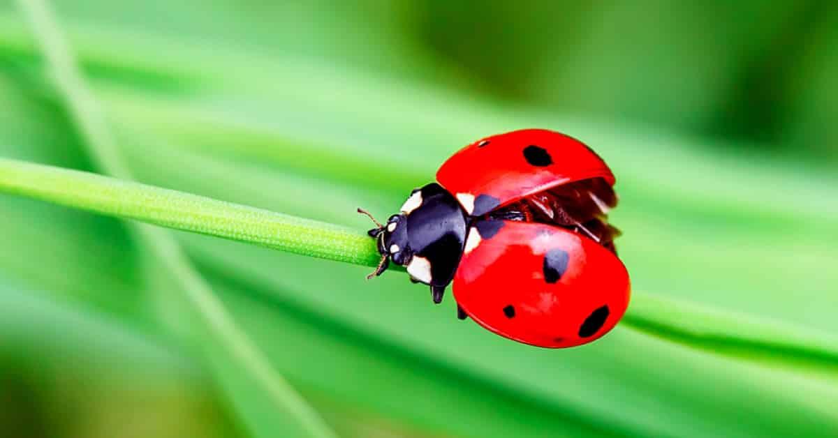 Kimyasal pestisitlerin aksine biyolojik mücadele yöntemleri, çevrede kalıntı bırakmazlar, yeraltı sularına sızmaz ve dirençli böcek türleri oluşturmaz.