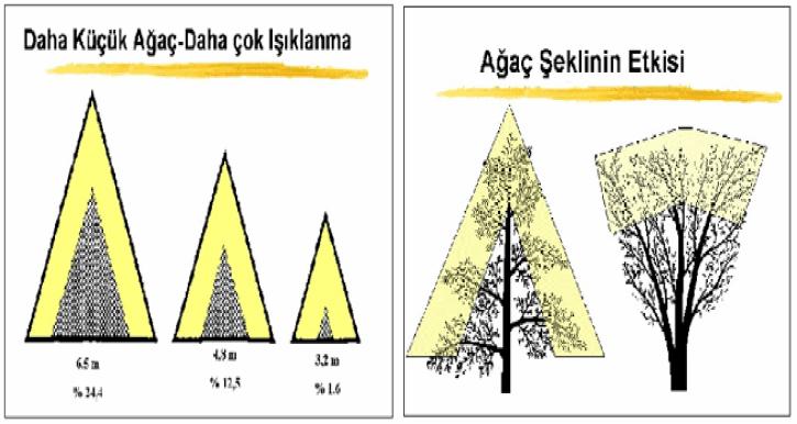 Ağaçlar şekillerinin ışıklanmaya etkisi