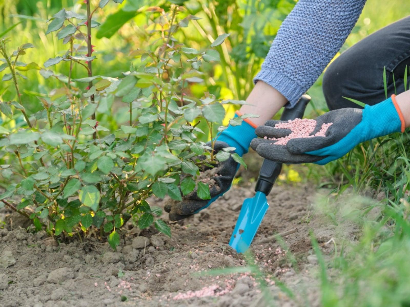 Bitkisel üretimin vazgeçilmezi olan gübrelerin, bilinen bazı yanlış algılarla ilgili olan doğruları.