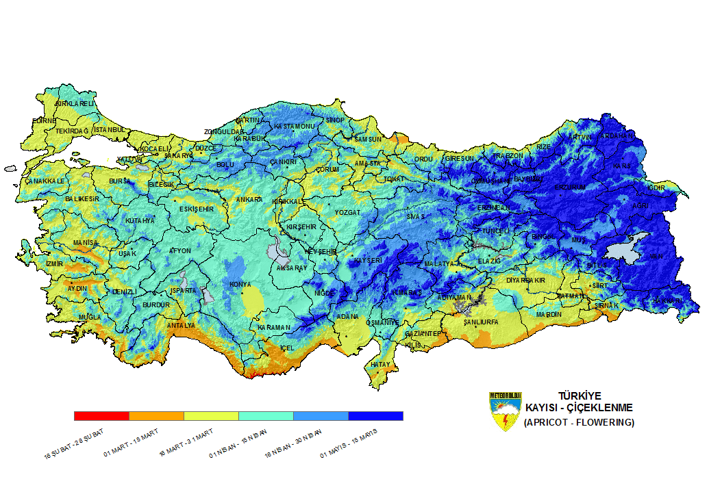 Türkiye'de bölgelere göre kayısı çiçeklenme zamanları