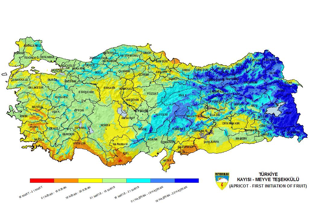 Türkiye'de bölgelere göre kayısı oluşma zamanları