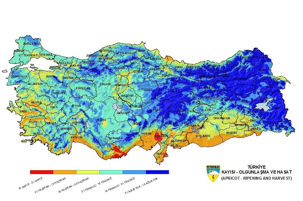 Türkiye'de bölgelere göre kayısı olgunlaşma ve hasat zamanları
