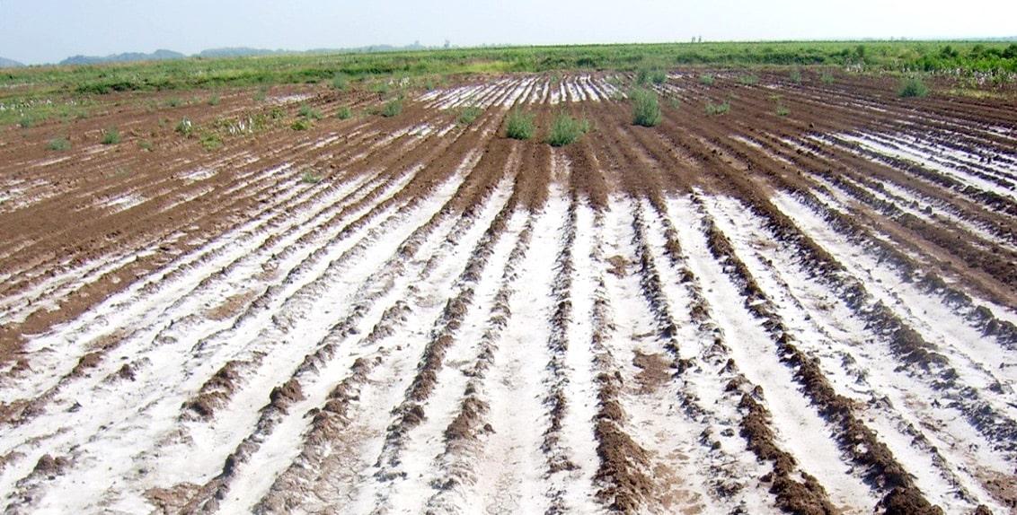 Toprak tuzluluğu, tarımsal verimlilik ve sürdürülebilirlik üzerindeki olumsuz etkilerinden dolayı küresel bir sorundur.