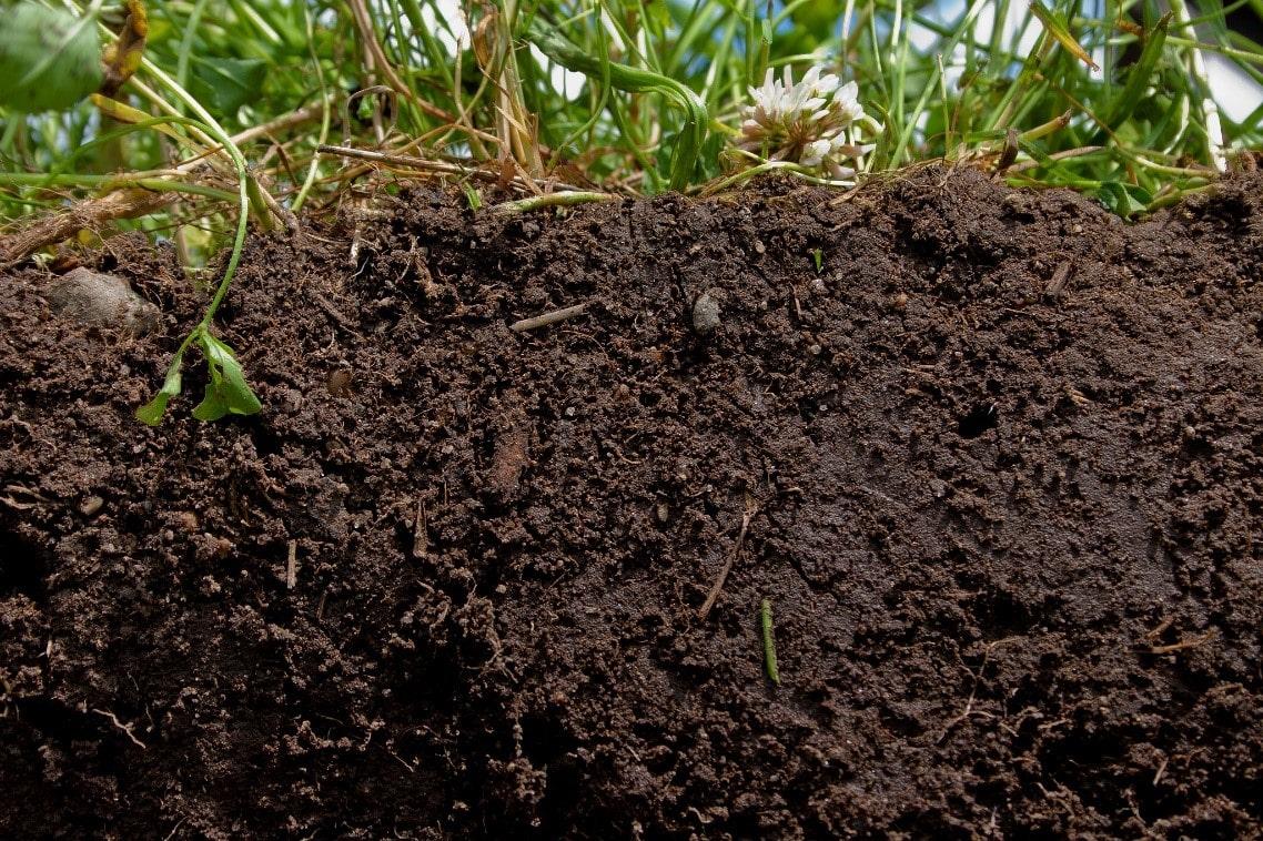 Organik maddece zengin bir üst toprak