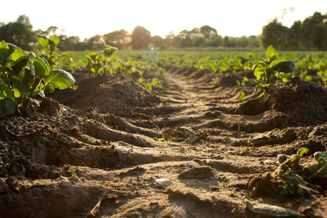 Toprak içinde var olan besin elementlerinin ve organik maddenin korunması, sürdürülebilir tarımsal üretimin öncelikli konularından birisidir.