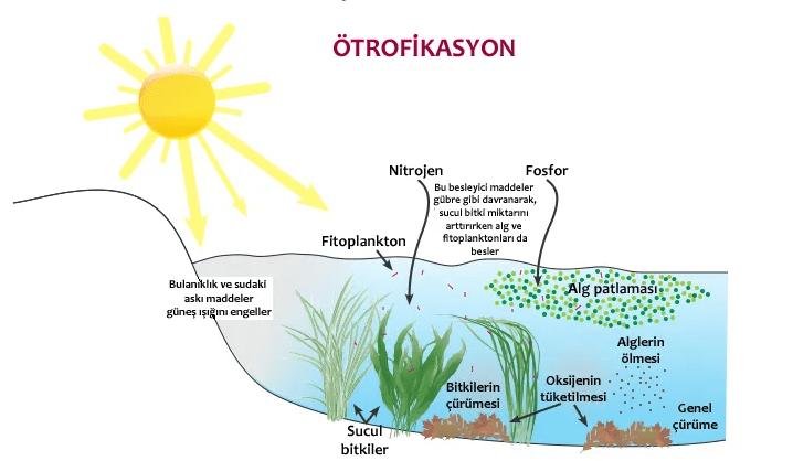Ötrofikasyon