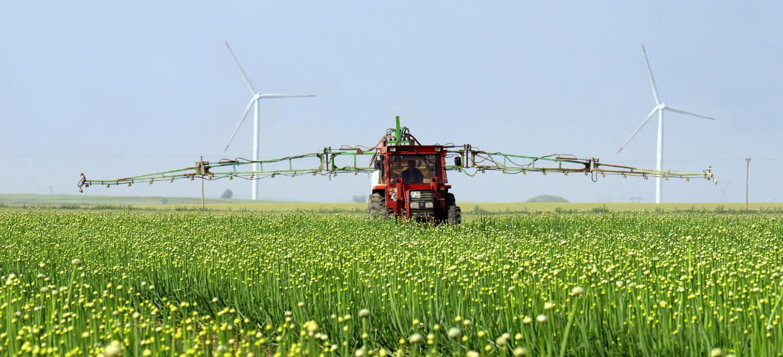 Soğan tarlasında çalışan traktör.